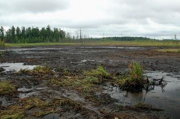 Торф как эффективное удобрение и влияние на экологию