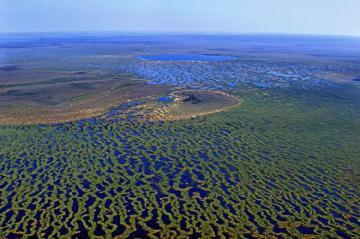Крупнейшее болото в мире