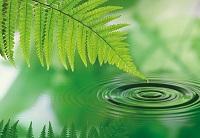 Определение понятия экология