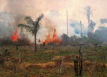 Выжигание леса