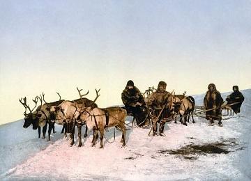Жители Арктики
