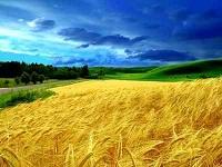 Что такое экология определение