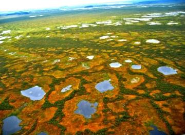 Болота Сибири, самые большие в мире