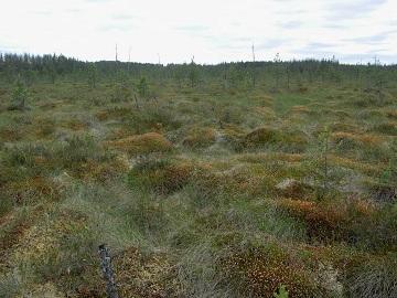 Внешний вид верхового болота
