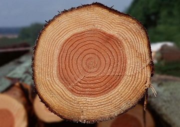 Породы дерева для бруса