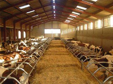 Скотоводческая ферма