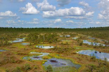 Вид на болото сверху