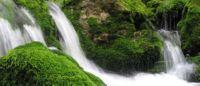 биосфера как глобальная экосистема