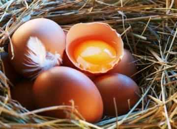 почему куры клюют яйца что делать