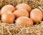 как повысить яйценоскость кур в домашних условиях