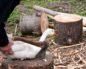 выращивание гусей в домашних условиях на мясо