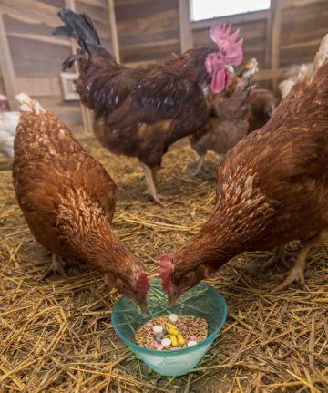 антибиотики для лечения кур