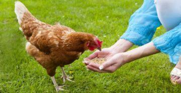 лекарство для цыплят