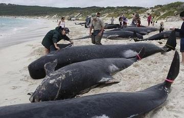 Гибель китов