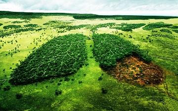 Значение лесов для человечества