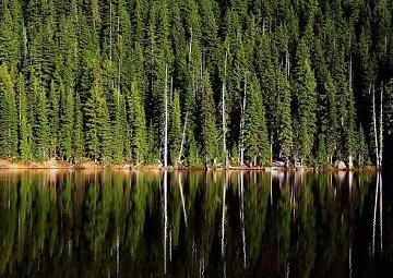 Байкальский лес