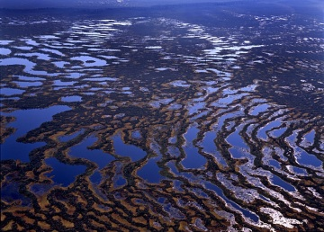Значение болота для региона