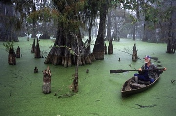 Луизианское болото