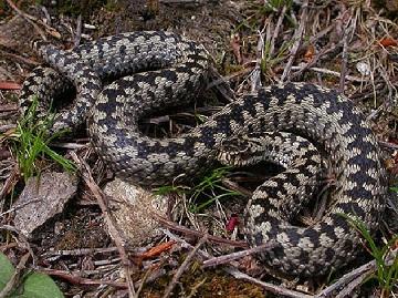 Змея на болоте