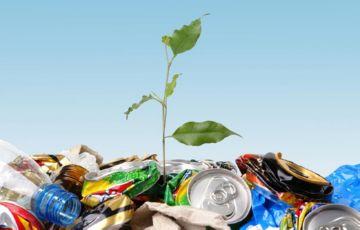 Росток среди мусора