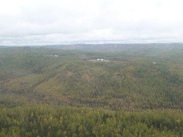 Чистый лес