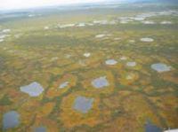 большое болото в мире