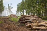 вырубка лесов экологическая проблема