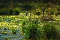 значение болот для природы и человека