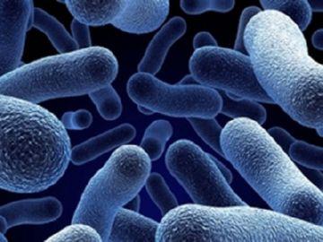 аэробные бактерии для септика