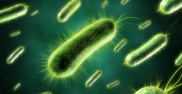 бактерии для септика