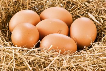 отбор яиц под наседку