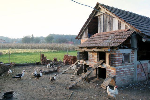 как построить теплый курятник