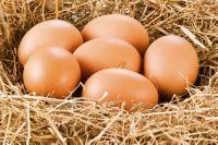 куры несут яйца без скорлупы почему