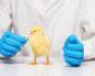 антибиотики для цыплят в первые дни жизни