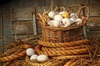 витамины для кур несушек для яйценоскости