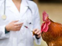 птичий грипп симптомы у людей