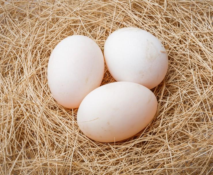 Количество яиц индоутки для высиживания
