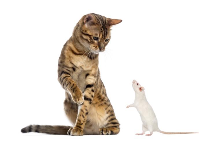 Как я зарабатываю на крысах и цветах
