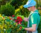 Сколько платят озеленителям в Краснодаре?